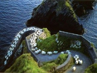 sheep, Ireland