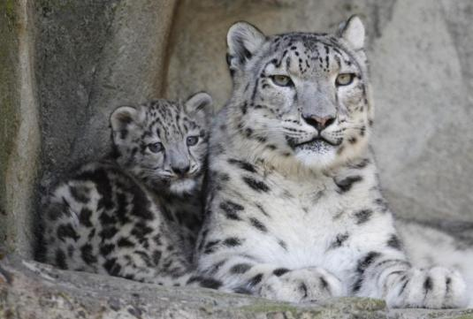 endangered species, animals