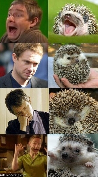Martin Freeman, hedgehog