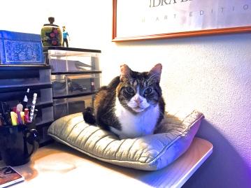 Henry's Pillow 2